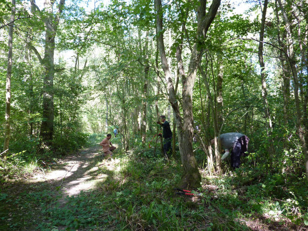 Coppicing course