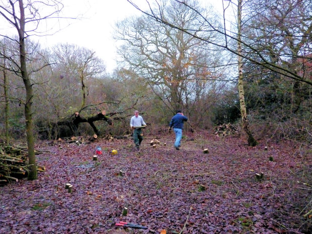 Coppicing at Alvecote Wood