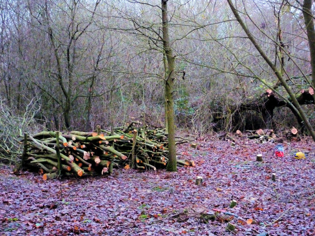 Wood piles and coppice area