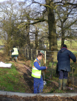 Putting in a new hedge at Alvecote Wood