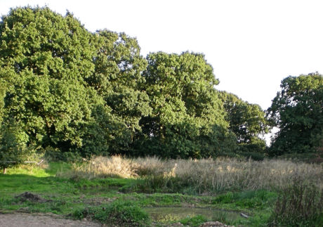 Alvecote woods - clearing and ponds