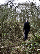 Overgrowth of brambles at Alvecote Wood